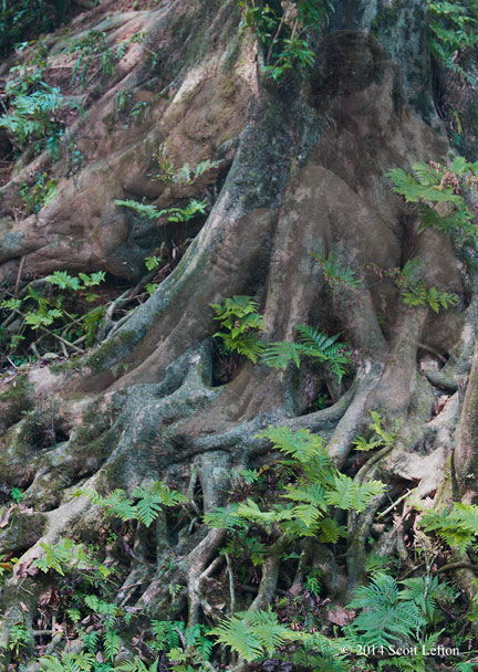 Two figures sleep within the tangled roots of a rainforest tree.